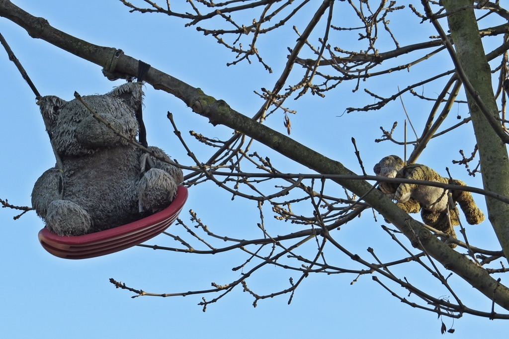 ​Teddy bears in tree on vacant site of skip company in  Gloucester Road (at the St James Road end) Croydon, South London