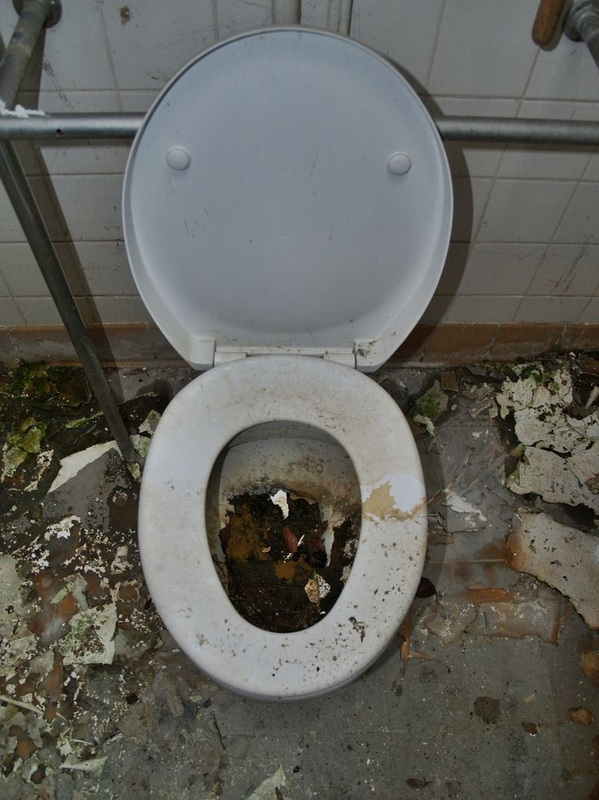 abandoned toilet in Kensington