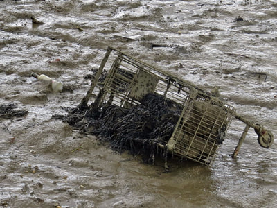 Suicidal Supermarket Trolley in the River Medway, Kent