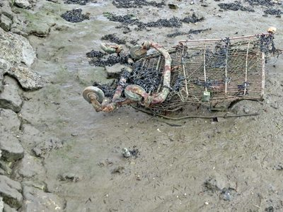 Crushed supermarket trolley on the foreshore of the River medway