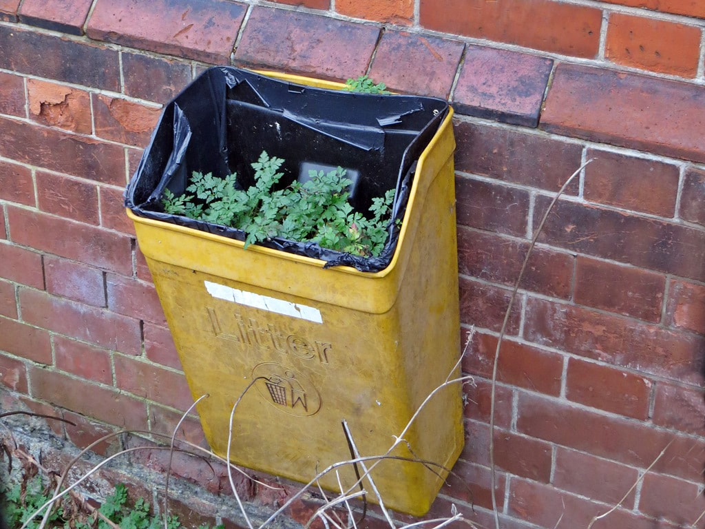 weeds growing out of a rubbish bin at derelict hospital site in East London