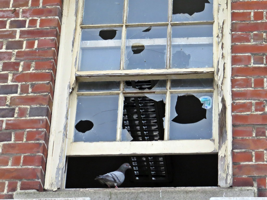Pigeons in broken windows of tumbledown decaying block of Whipps Cross Hospital