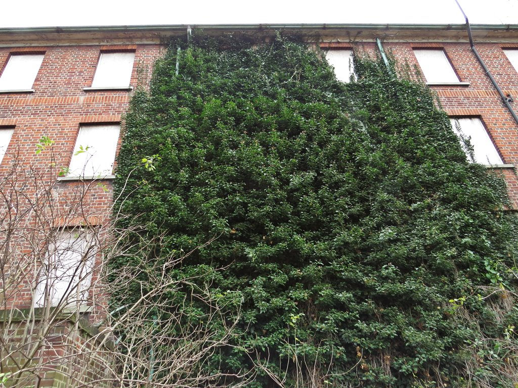 nature takes over disused hospital buildings in East London, E11
